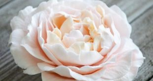 Lifelike Flowers Made with Hearty Clay Air Dry Clay